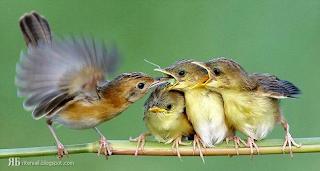 صورة لأطعام العصافير لصغارها..سبحان الله