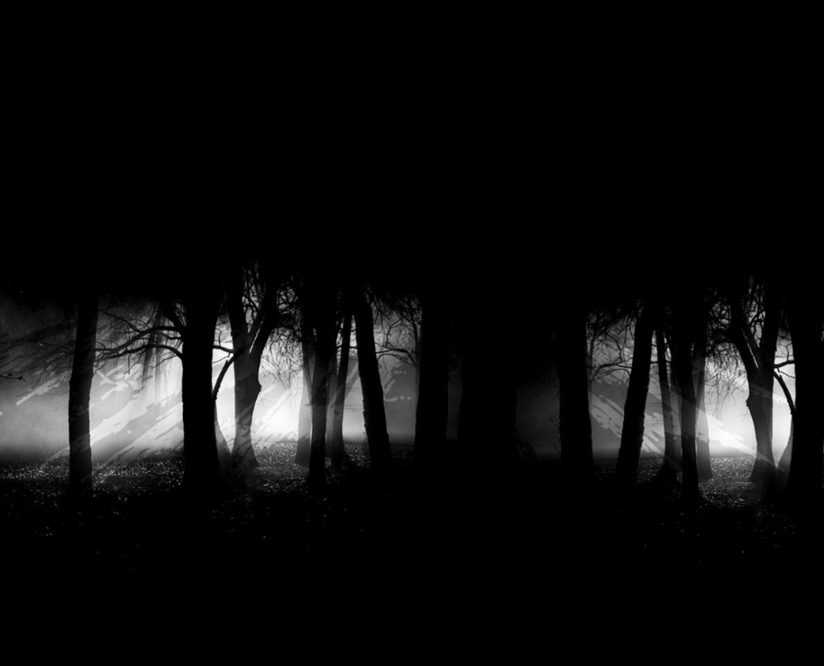 Dark Forest Wallpaper Widescreen