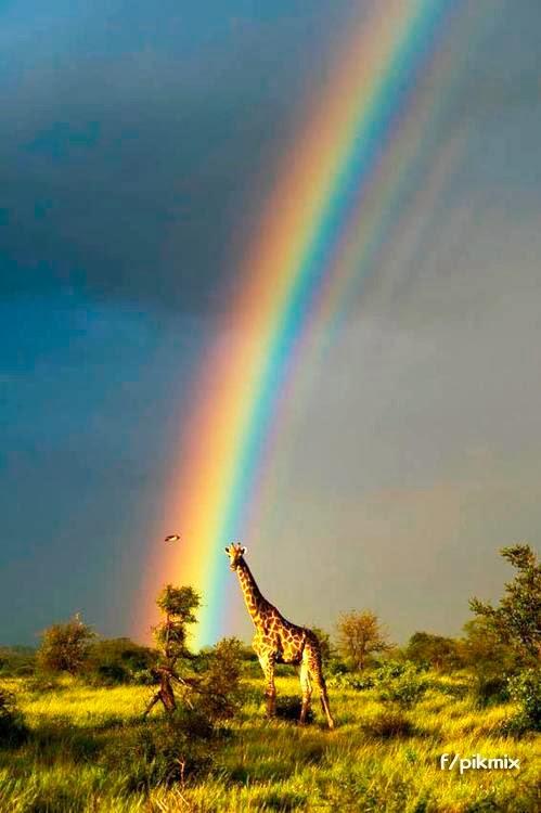 Jirafa y arcoiris - Naturaleza - Africa