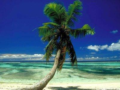 Pohon kelapa merupakan pohon yang sangat penting di banyak negara