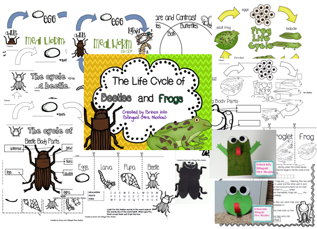 http://www.teacherspayteachers.com/Product/Life-Cycle-Unit-MealwormsBeetles-Frogs-Grades-1-3-1173497