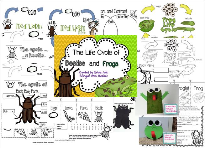 http://www.teacherspayteachers.com/Product/Life-Cycle-Unit-MealwormsBeetles-Frogs-Grades-1-3-1173497