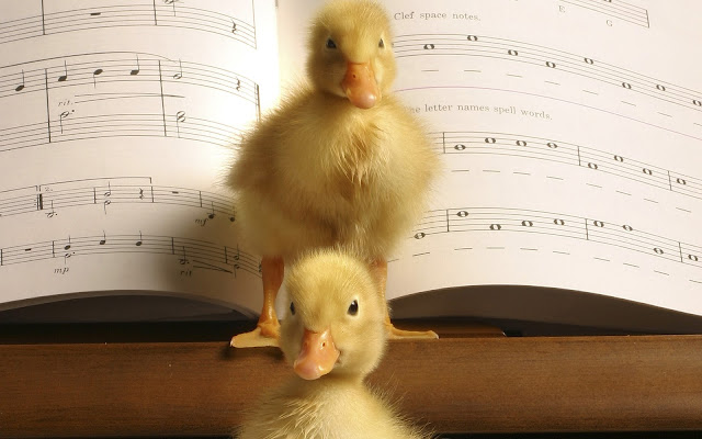 Best Jungle Life piano, ducklings, musical notes, music