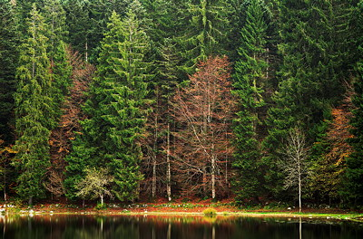 Photo of the autumn forest around Génin lake