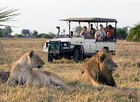 Afrika da Safari