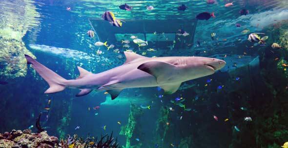 World Visits Sydney Aquarium One Of The Greatest