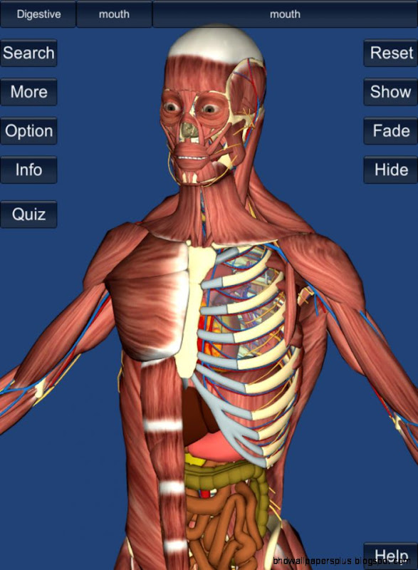 Education Mobile  3D Anatomy app