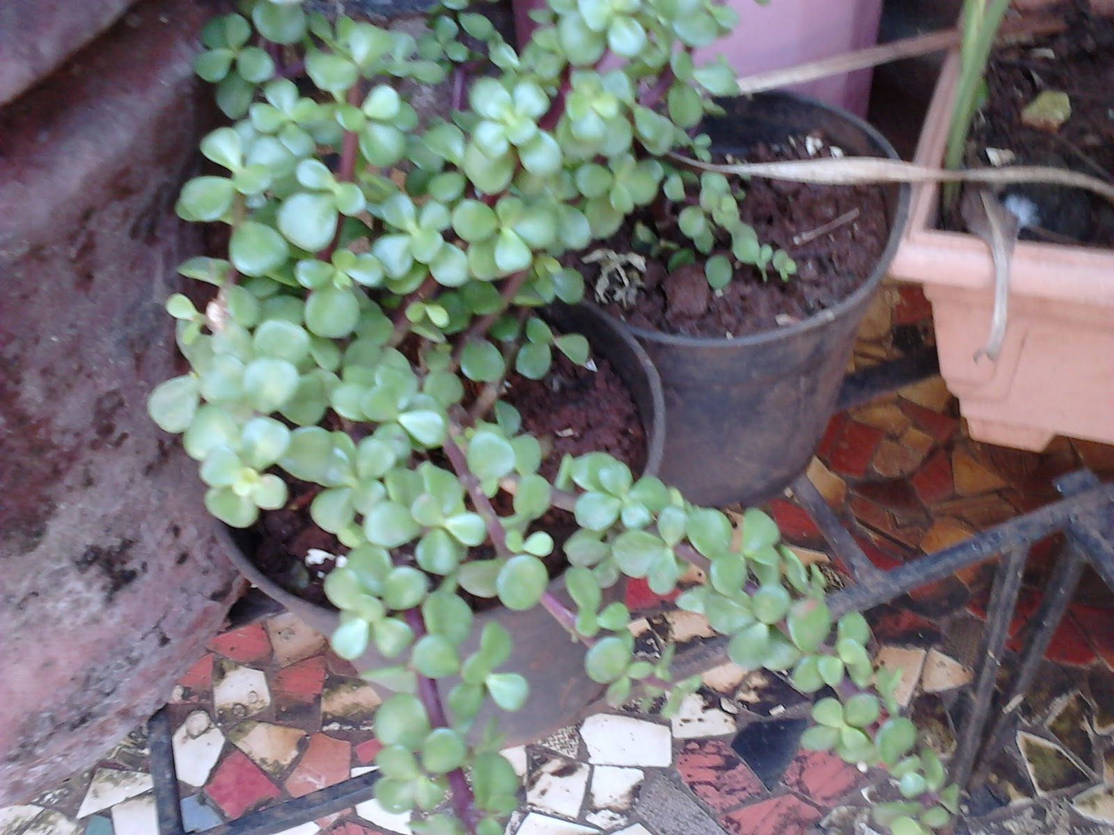 Garden care simplified pair of plants in relationship - Plants for good feng shui ...