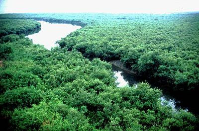 Sundarban natural mangrove forest