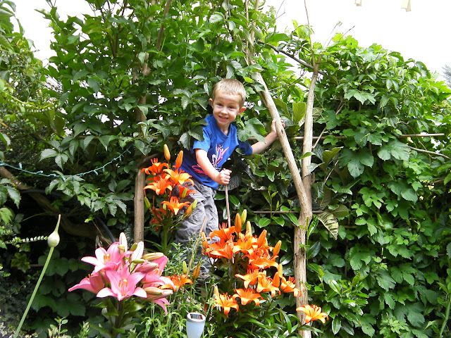 beautiful lilies, garlic flower, hops humulus lupulus and a boy in a buddleia tree