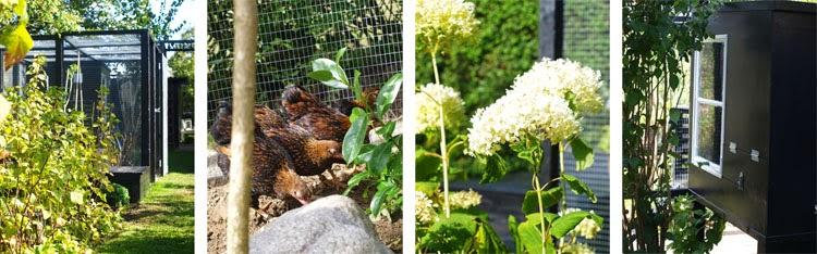 Sort hønsehus og hønsegård til guldrandede dværg wyandotter