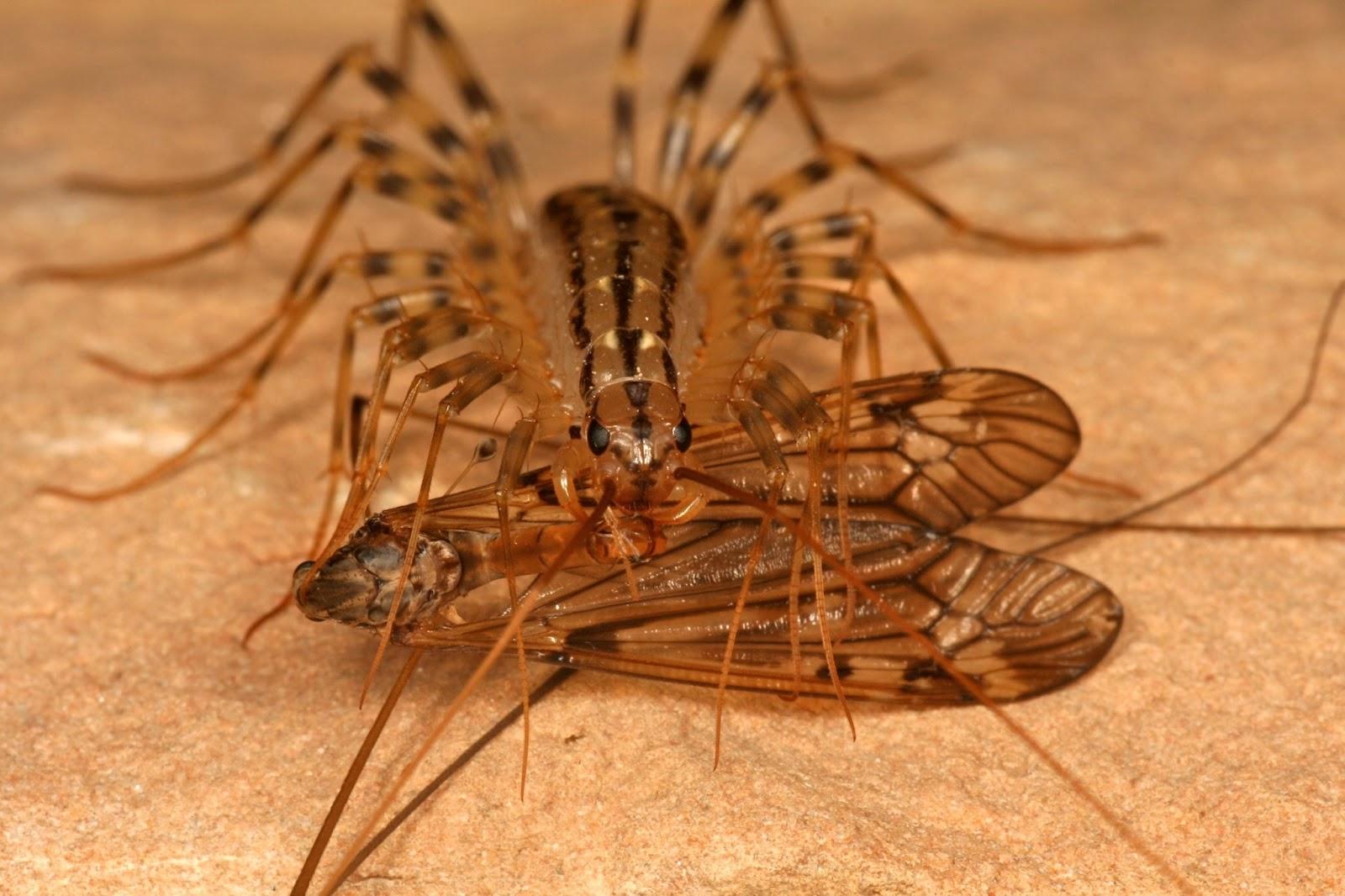 Insecte Salle De Bain Volant ~ on a test pour vous nos amis les insectes mes sensibles s