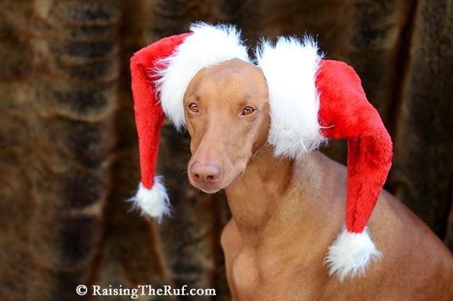 Dog 12 Days Of Christmas RaisingTheRuf Sara Rehnmark