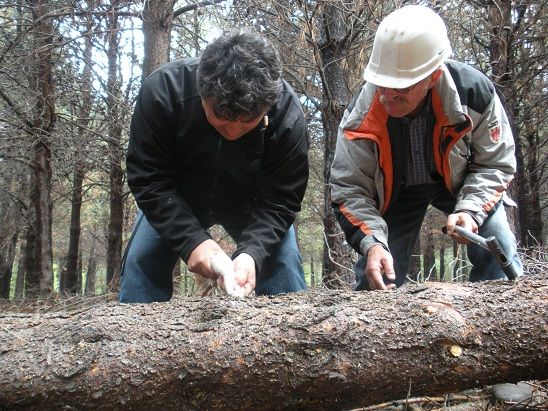 Patagonia andina forestal campa a de control contra la for Viveros en neuquen