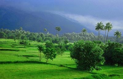 Southwest monsoon in Kerala, Monsoon Rain Picture , it's raining kerala monsoon raining pictures