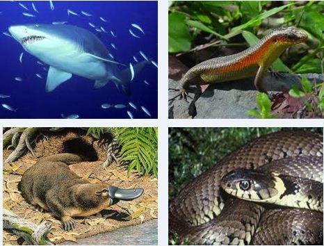 Pengertian Sistem Reproduksi pada Hewan (Ovipar, Vivipar dan Ovovivipar)
