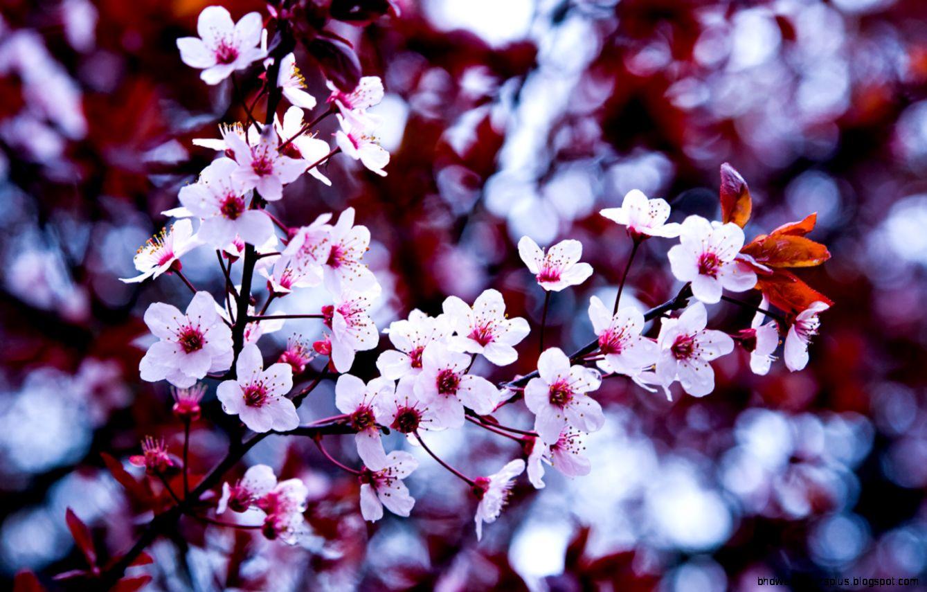 Flowers Tumblr 1440x900  HQFX Pictures