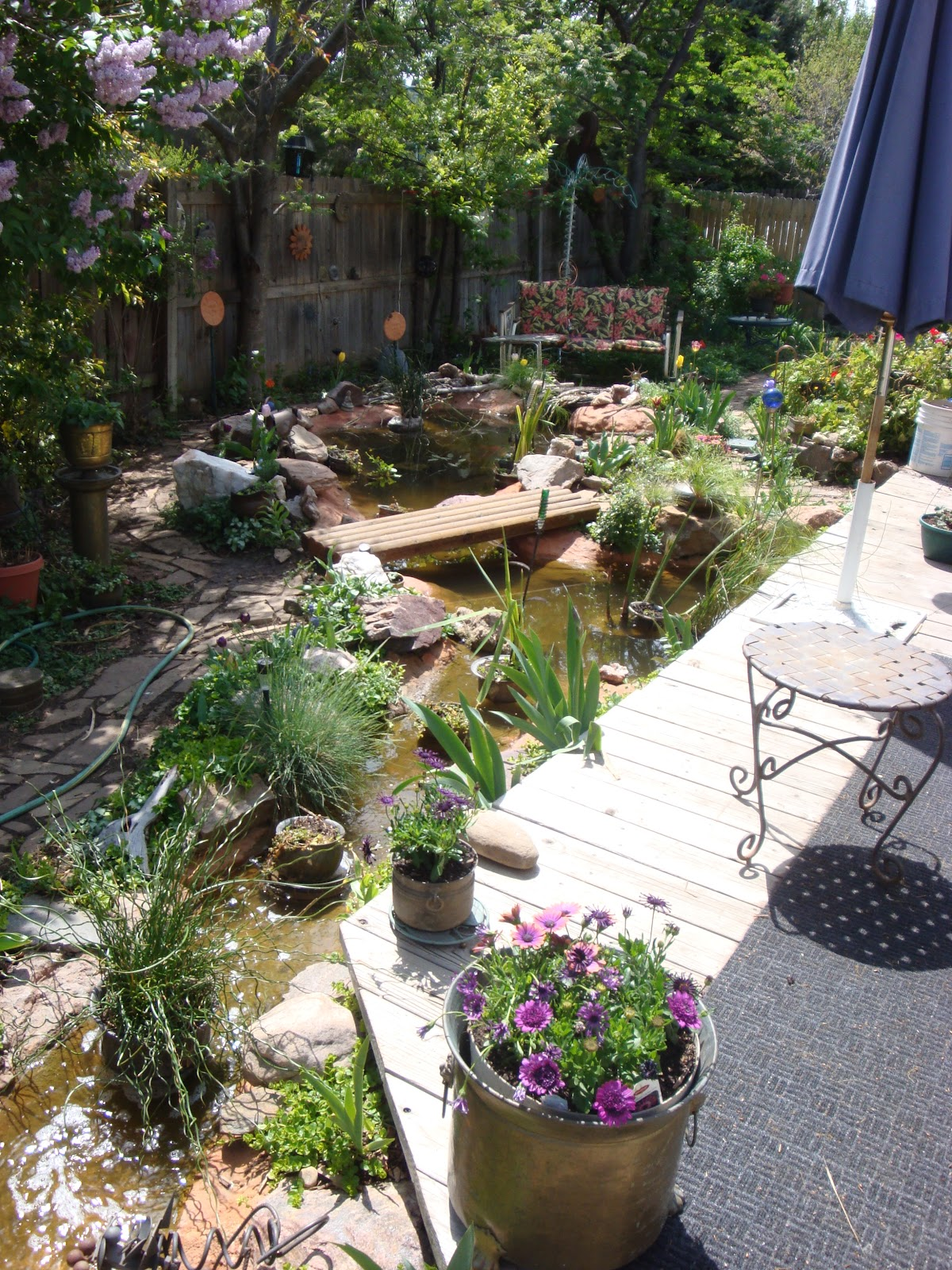 jeffco gardener creating a backyard pond by rich haas