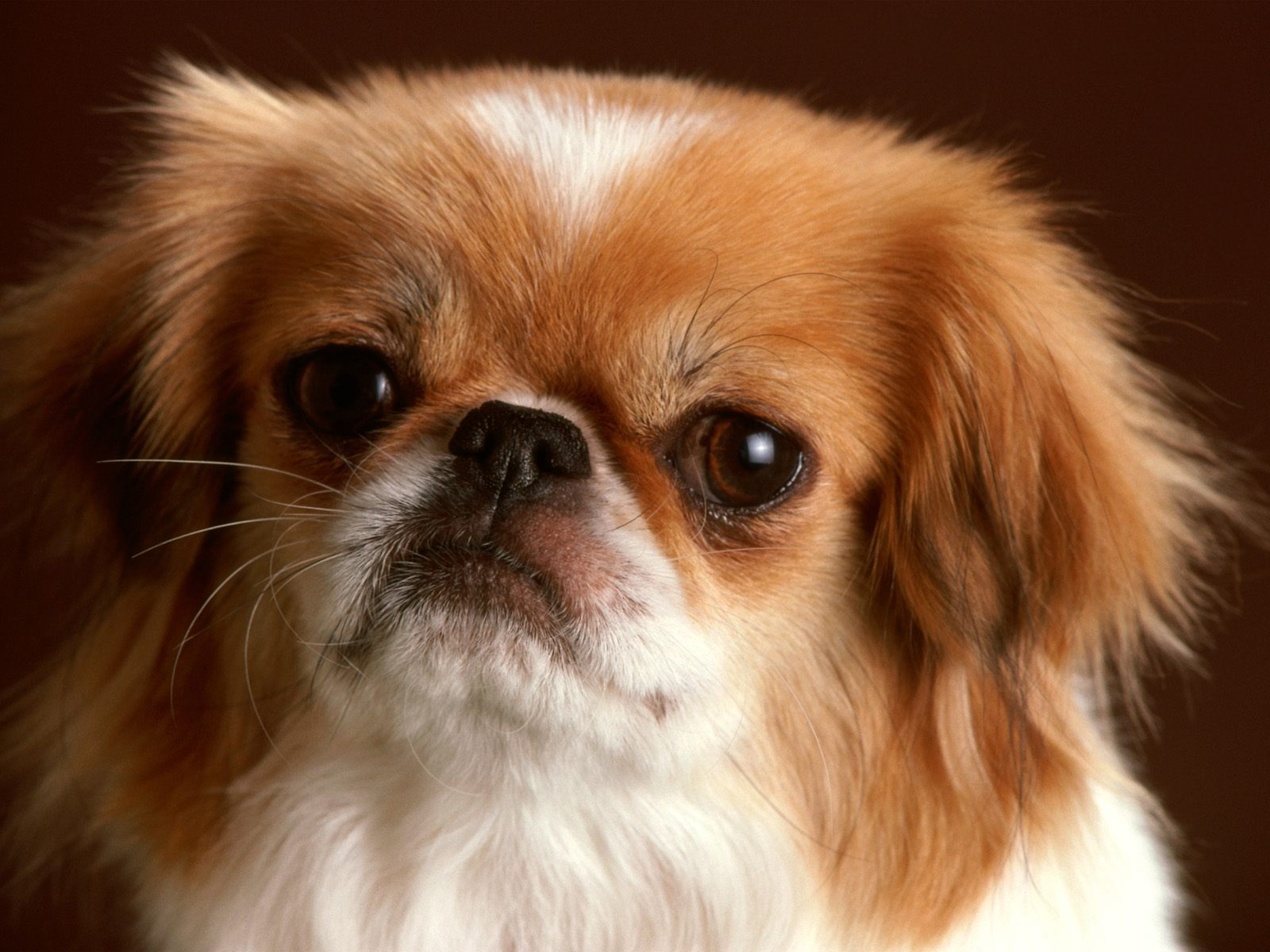 http://3.bp.blogspot.com/-_KRB8ZGoIjo/Ti1ThEog__I/AAAAAAAAAUY/PVk2MubbMmA/s1600/Dog-1.jpg