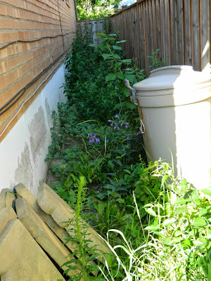 Scarborough Toronto side yard cleanup before by Paul Jung Gardening Services