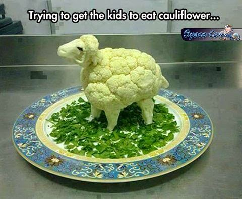 funny cute sheep picture