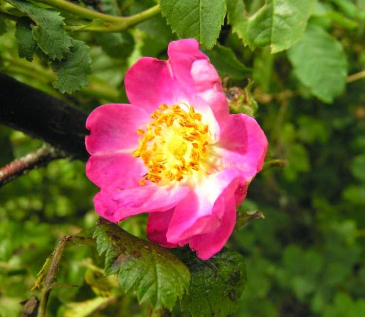 Never say book il linguaggio segreto dei fiori il for I fiori della balsamina