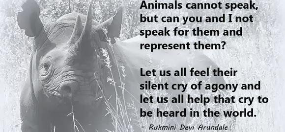 Rhino Quotes. QuotesGram