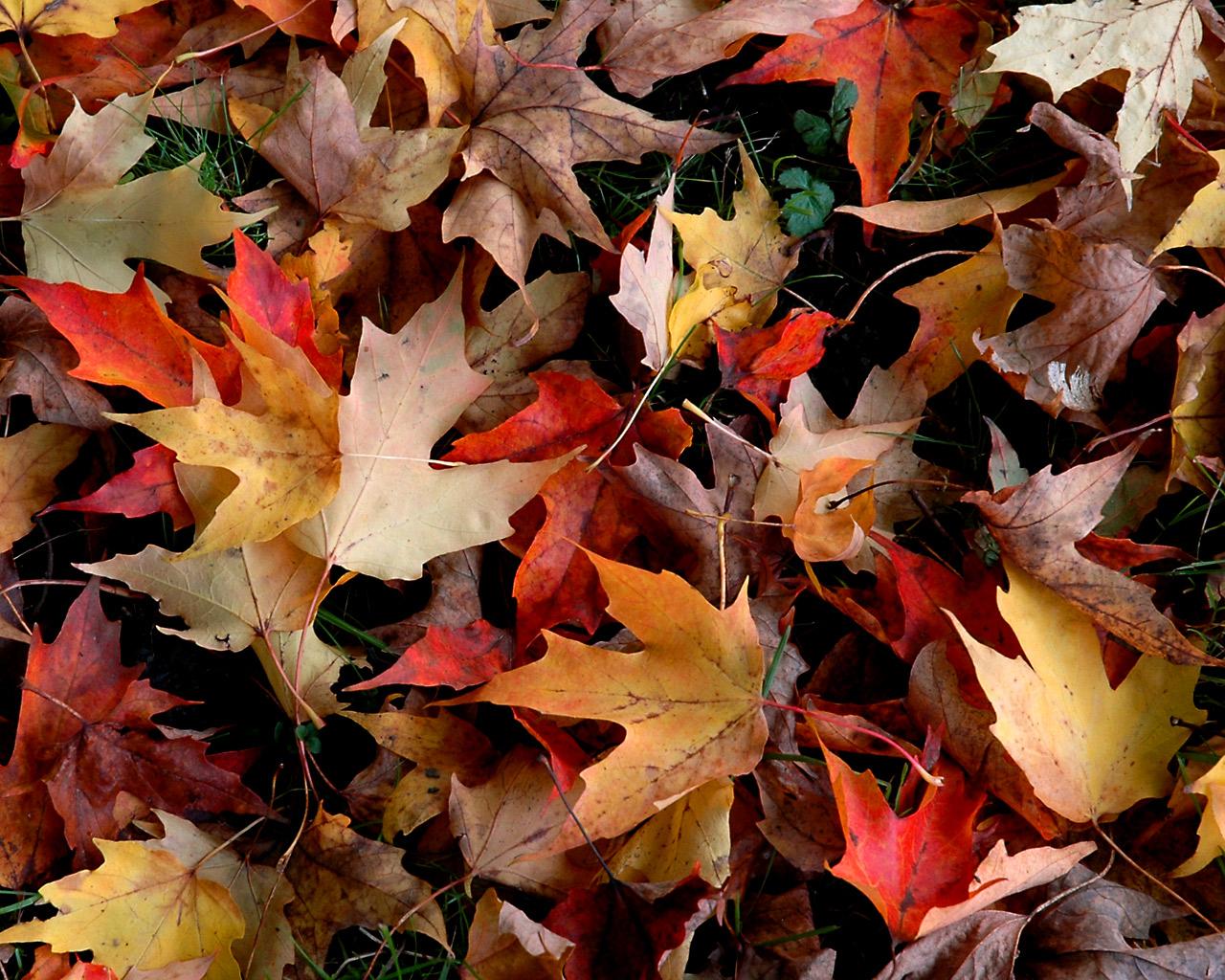 http://3.bp.blogspot.com/-_LHJLb9g8dk/TopNtYySh2I/AAAAAAAATig/LbnMKHncAfY/s1600/autumn-wallpaper.jpg