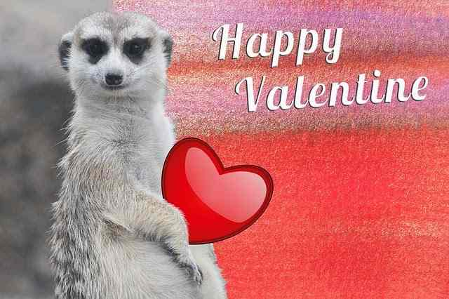 Funny Valentines Day Messages   Funny Valentines Day Messages