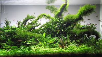 Aquascape 10