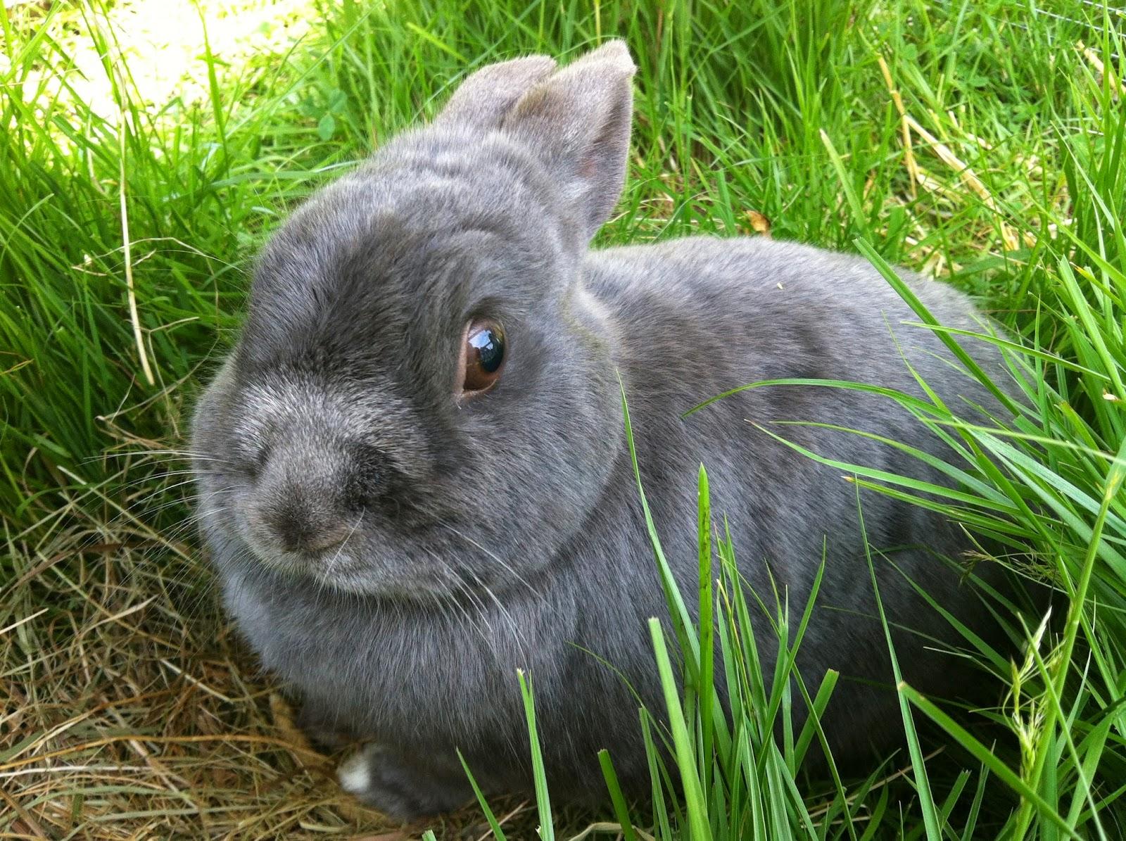 Mr Socks, rabbit
