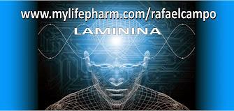 LAMININA