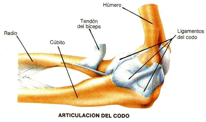 Anatomía Ramón: Ramón Actividades Unidad 3: Biomecánica del movimiento