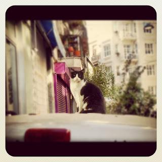 Istanbul Stray Cat Sitting on a Car