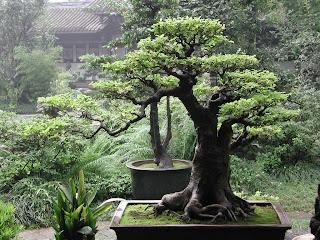 اجزاء النبات صور   الابتدائي 2840_01250263409.jpg