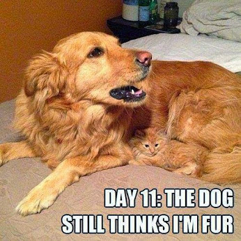Funny cat and dog pic