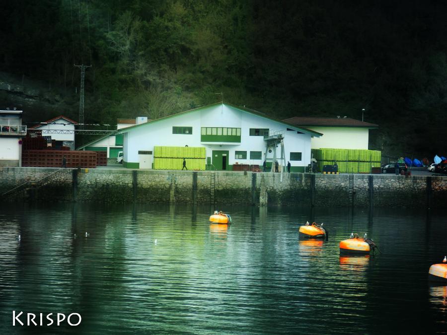 lonja del puerto pesquero de hondarribia