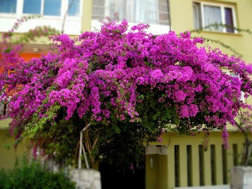 Flores y rboles octubre 2012 - Plantas para macetas exterior resistentes ...