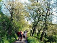 """El camí passa per una zona boscosa a prop del mas Garrigons. Autor: Francesc """"Caminaire"""""""