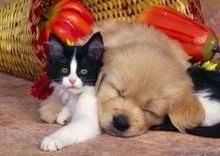 Os animais são nossos amigos