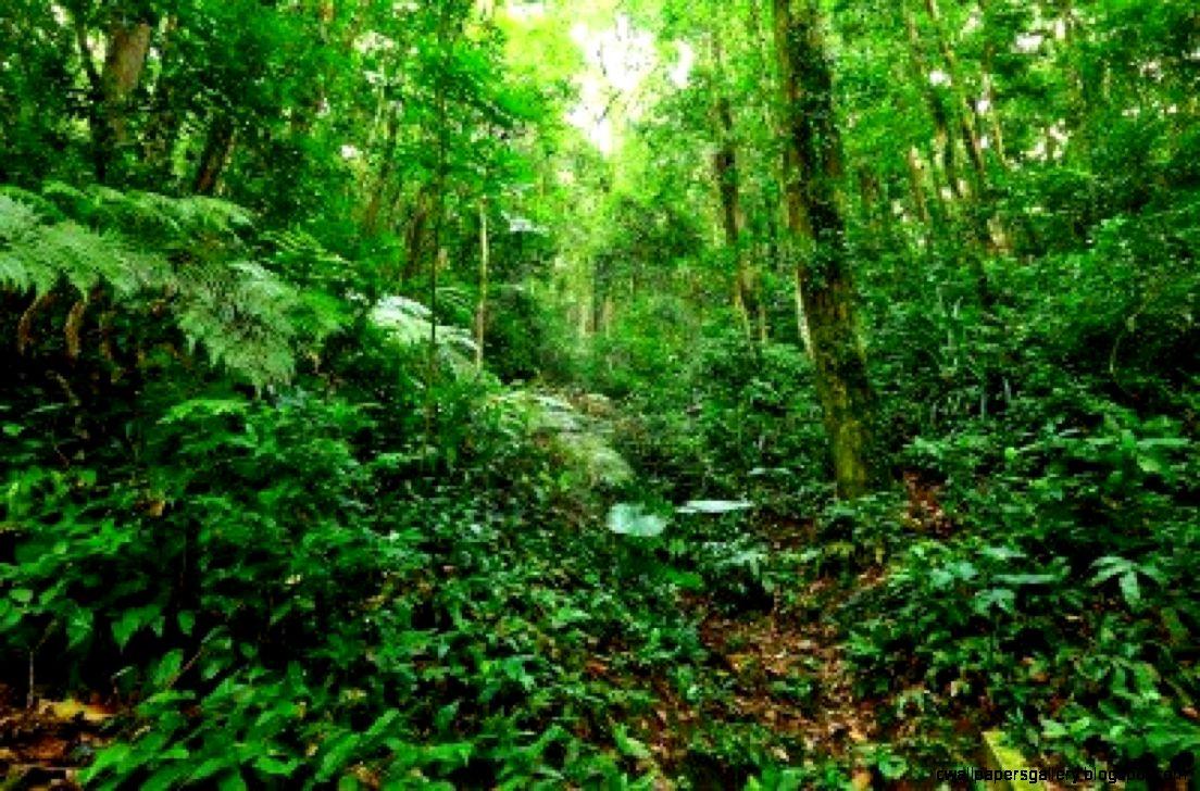 Inside a Tropical Rainforest   Harris Academy South Norwood