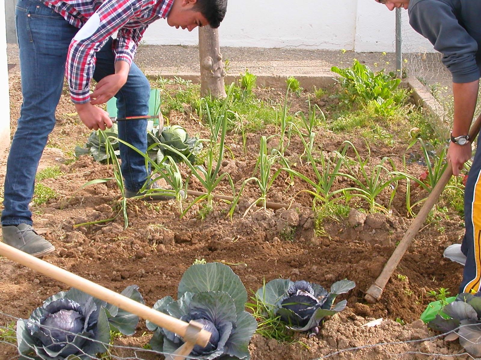 Huerto ies ilipa magna preparar la tierra para la nueva - Preparacion de la tierra para sembrar ...