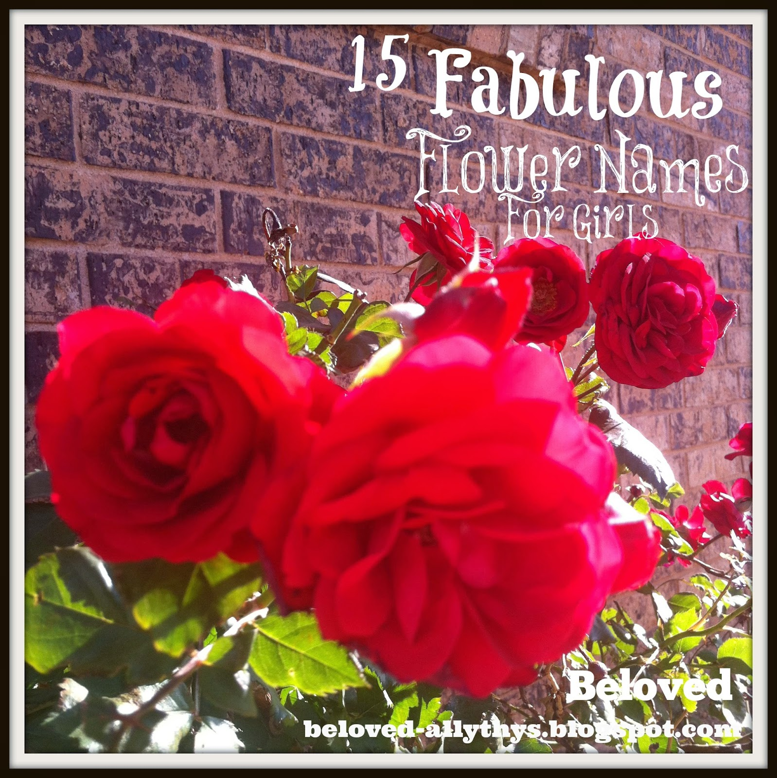 Beloved Baby Names Fifteen Fantastic Flower Names For Girls
