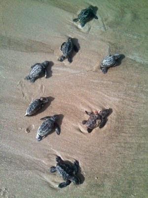 Oito tartarugas foram encontradas mortas em praia de Ilhéus (Foto: Marilene Rosa/Arquivo Pessoal)