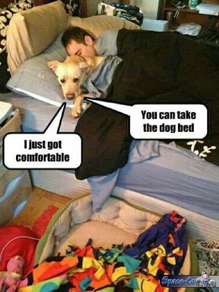 funny dog bed picture
