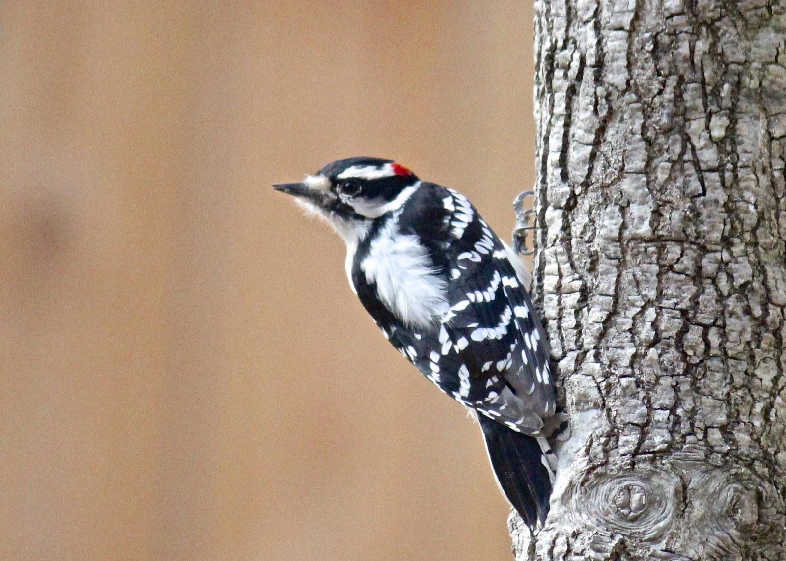Wild About Birds - Detección de pájaros carpinteros