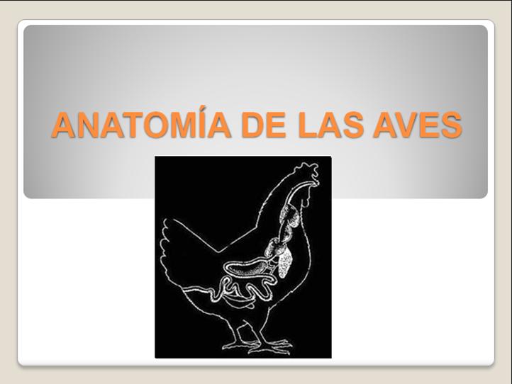 ANATOMIA DE LAS AVES ALONSO | PRODUCCIÓN AVÍCOLA MVZ-UNICOOP