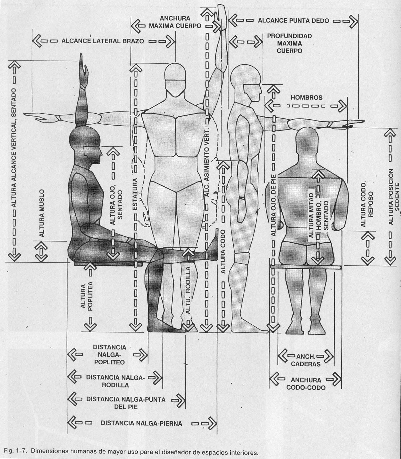 Ergonom a y salud ocupacional t cnicas de la ergonom a for Medidas antropometricas del cuerpo humano