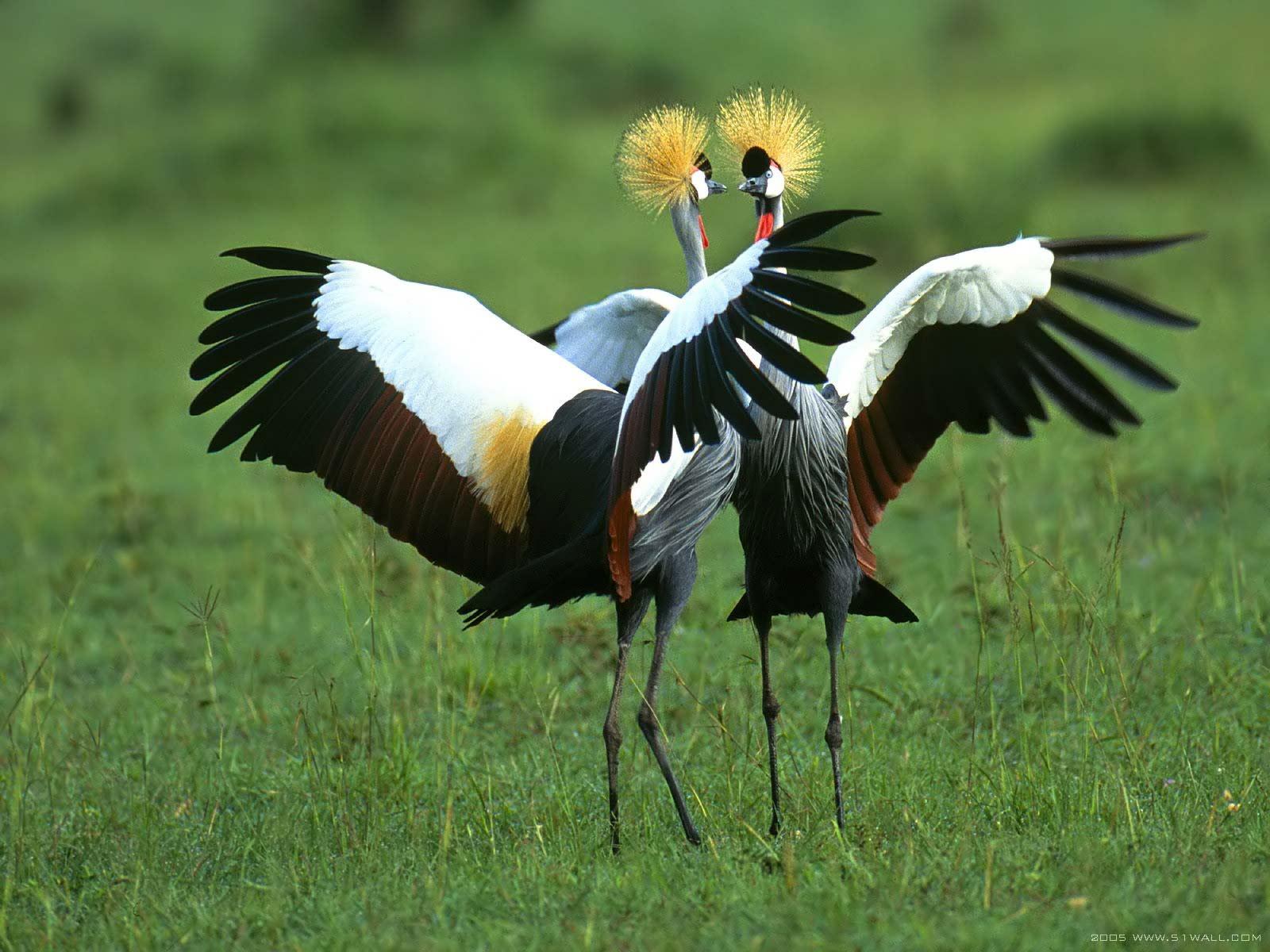natural captured and interesting animals pictures for desktop