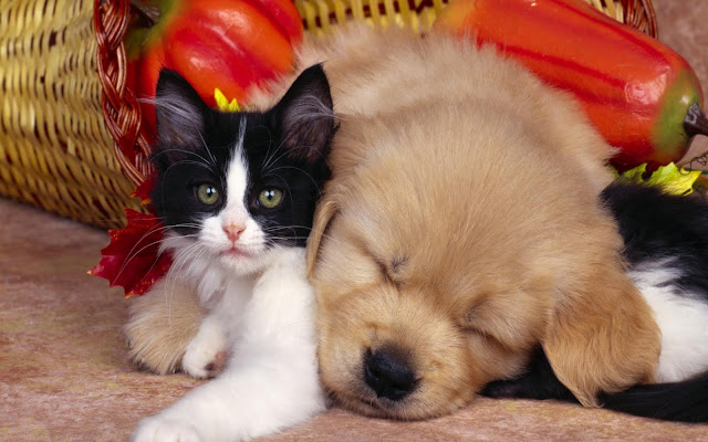 Cute+cat+and+dog